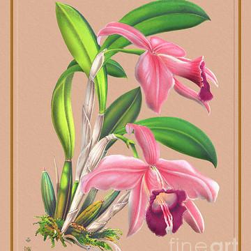Orchid Flower Orchideae Plantae Part 1