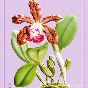 Orchid Flower Orchideae Plantae Part 2