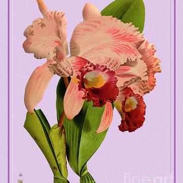 Orchid Flower Orchideae Plantae Part 3