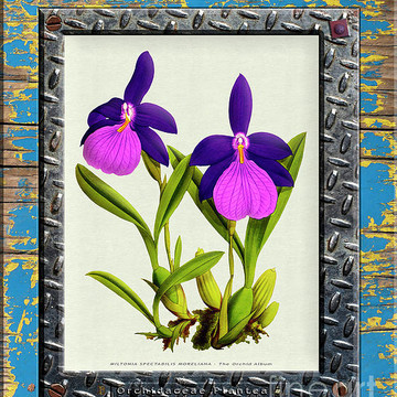 Orchid Framed Weathered Plank Rusty Metal