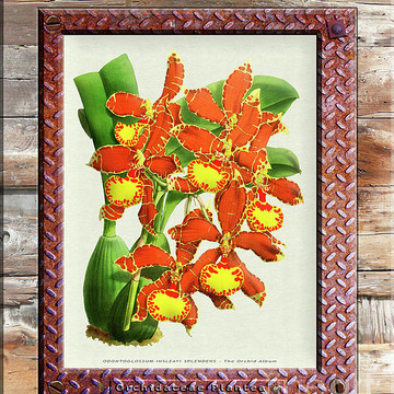 Orchid Framed Weathered Plank Rusty Metal Part 3