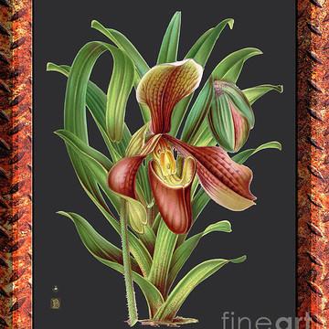 Orchid Vintage Print Metal Rusty