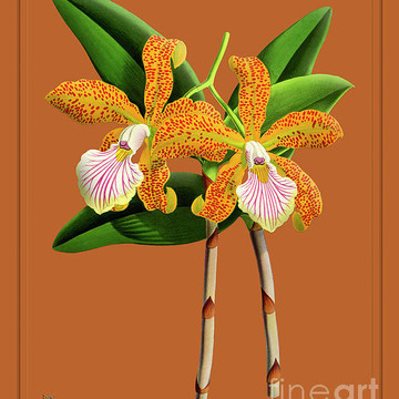 Orchid Vintage Print on Colored Paperboard Part 2