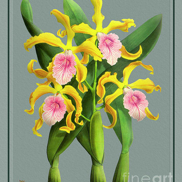 Orchid Vintage Print on Colored Paperboard Part 3