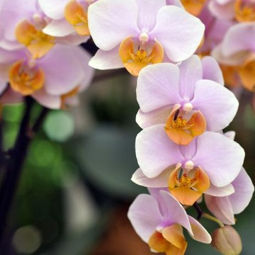 Orchids Collection