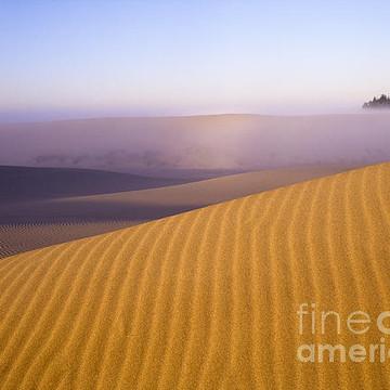 Oregon Dunes National Recreation Area Collection