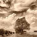 Other Sepia and BW images Collection