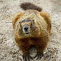 Otters-Badgers-Marmots-Squirrels-Beaver-Stock Images Collection