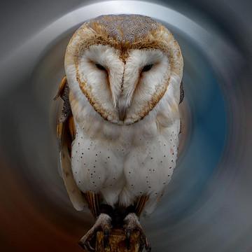 Owls Raven Falco Ect.  Collection