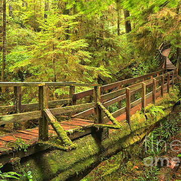 Pacific Rim National Park - Rainforest Trail - Vancouver Island - British Columbia - Canada Collection