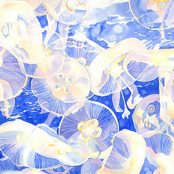 Paintings - Sea Creatures Collection