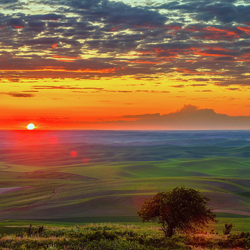 Palouse Farmland Collection