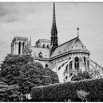 Paris - Notre Dame by GCF Photography Collection