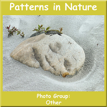 Patterns in Nature Collection