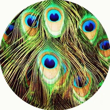 Peacock Collection Collection