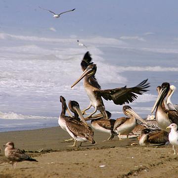 Pelican Magic Collection