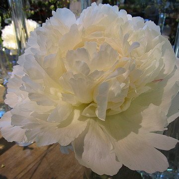 Peonies  Collection