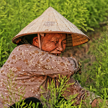 People of Vietnam Collection