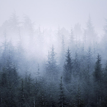 Personal work Misty trees Collection