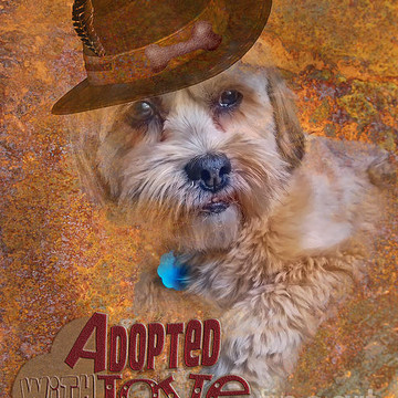 Pet Adoptions Collection