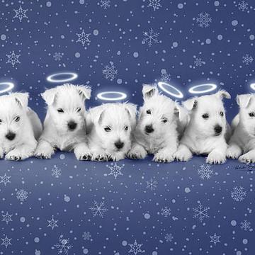 Pet Christmas Photos and Holiday Greetings