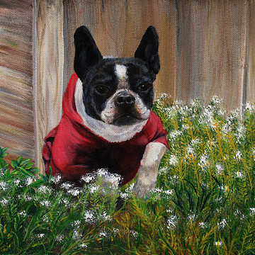 Pet Portraits Collection