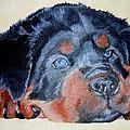 Pet Portraits Collection
