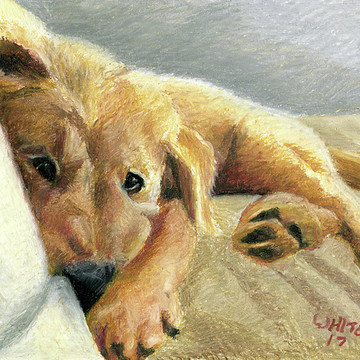 Pets & Animals Realism Collection