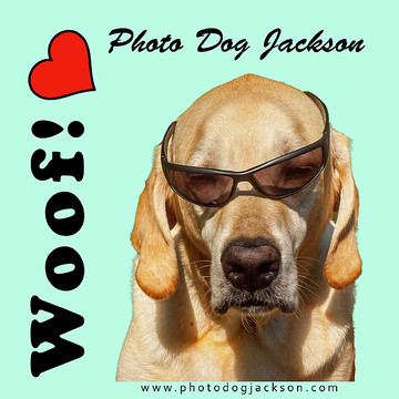 Photo Dog Jackson Products and Prints Collection