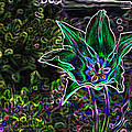 Photo Manipulation and Digital Art