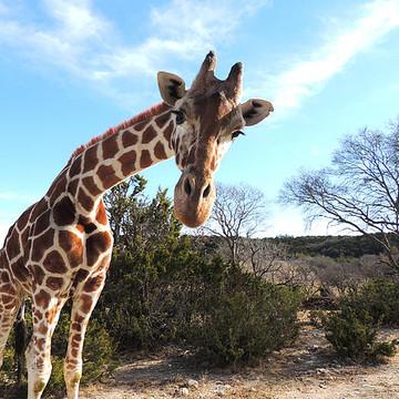 Photography - Fossil Rim Wildlife Center