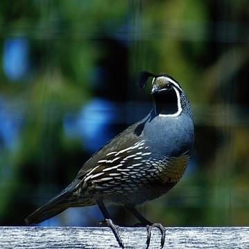 Photography Birds Collection