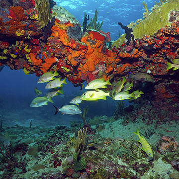 Photography - Coral Reefs USVI Collection