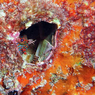 Photography - Fish Florida Collection