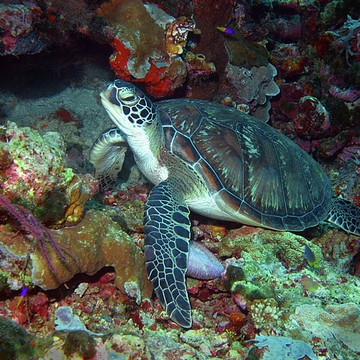 Photography - Sea Turtles Collection