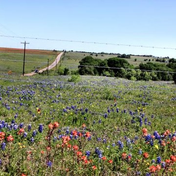 Photography Texas Wildflowers Collection