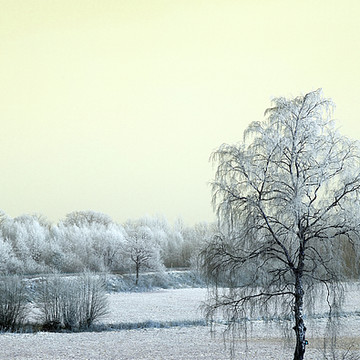 Photography - Winterland Series Collection