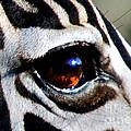 PHOTOS - Animals  Collection