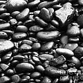 PHOTOS - Black & White Collection