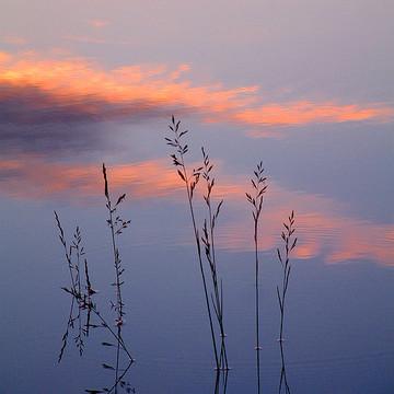 Pond Dreams Collection