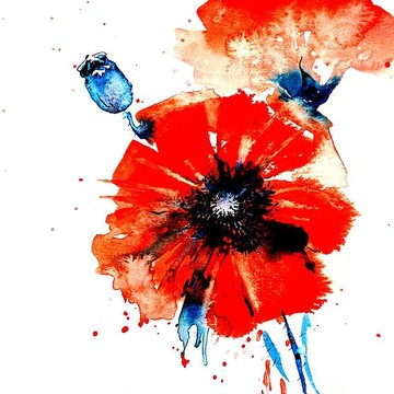 Poppies Collection