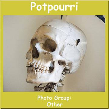 Potpourri Collection