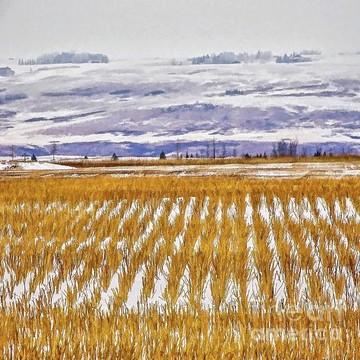 Prairie Collection