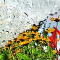 Rainy Days... Collection
