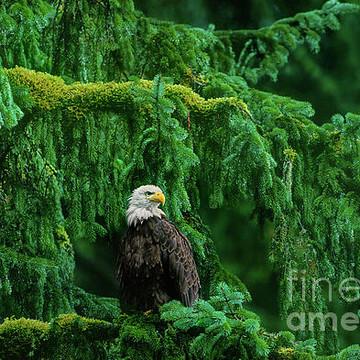 Raptors - Eagles Hawks Owls Collection