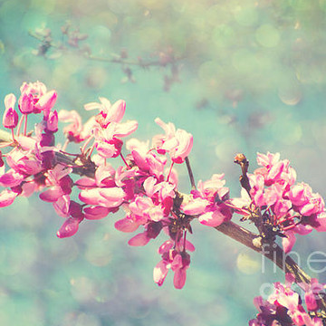 Redbud flowers Collection