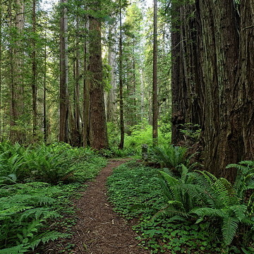 Redwood Forests Collection