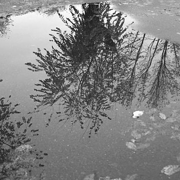 Reflections Collection
