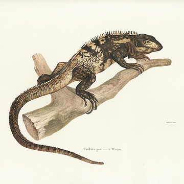 Reptile Illustrations Collection
