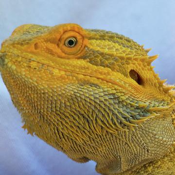 Reptiles Collection